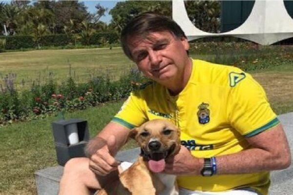 Presidente Bolsonaro sancionará nesta tarde, lei que aumenta pena para maus-tratos a animais